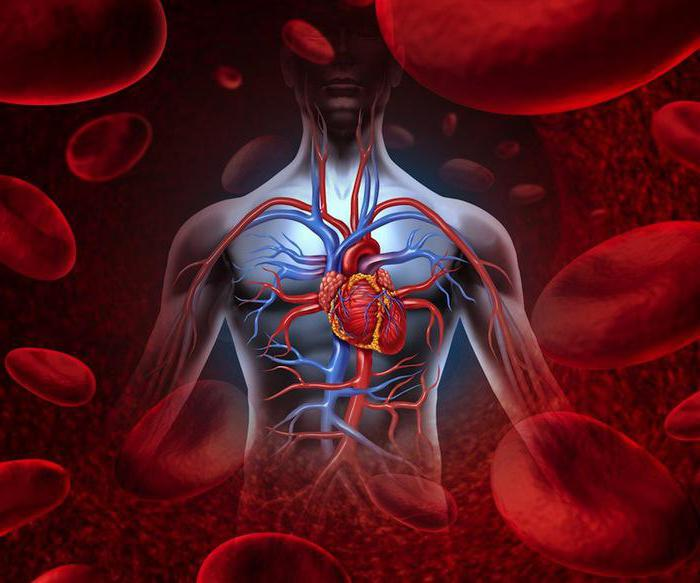 Болезни органов кровообращения