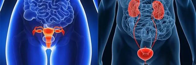 Болезни органов мочеполовой системы