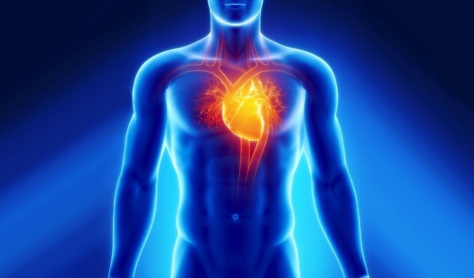 Заболевания органов сердечно-сосудистой системы